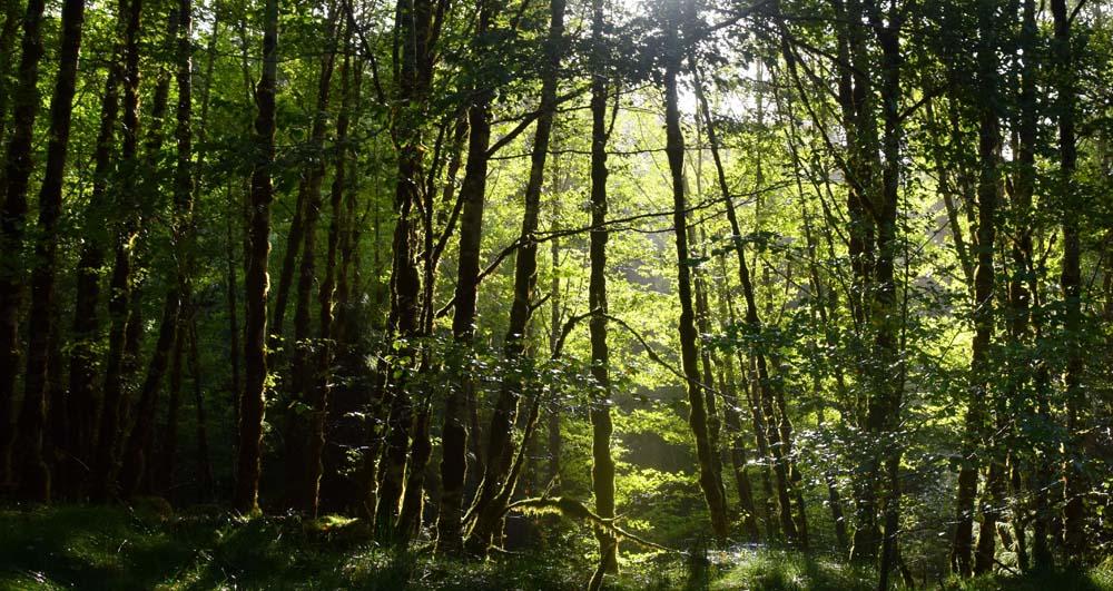woods in British Columbia, Canada